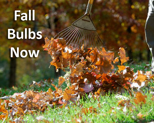 17-Fall-Bulbs-Now