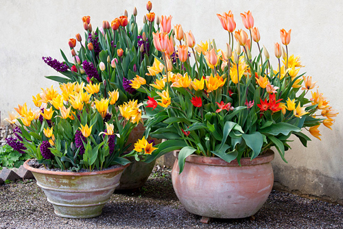 21-Bulbs-In-Flowerpots