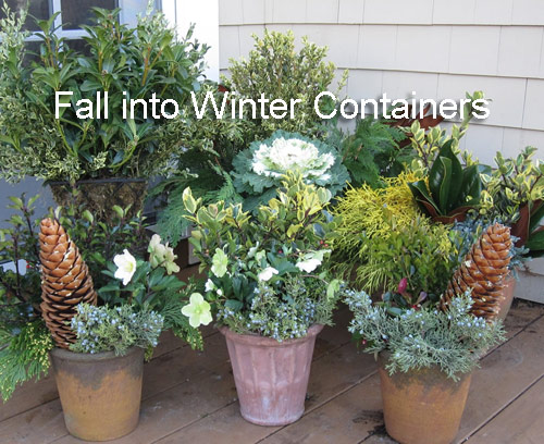 341-Fall-Containers-Tur
