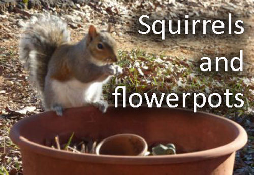 410-Squirrels-In-Flower