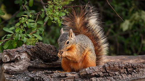 411-Squirrels-And-Flowe