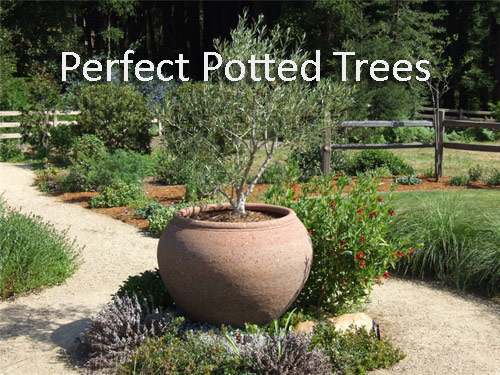 419-Perfect-Potted-Tree