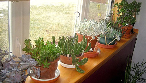 436-Potted-Succulents-I