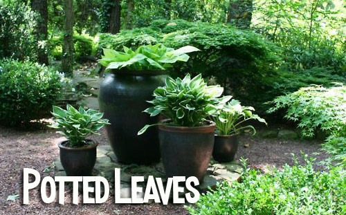 682-Potted-Leaves-Potte