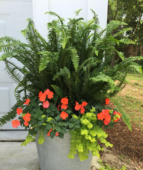687-Potted-Fern-In-Clay