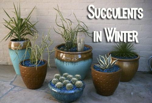 690-Succulents-In-Clay-