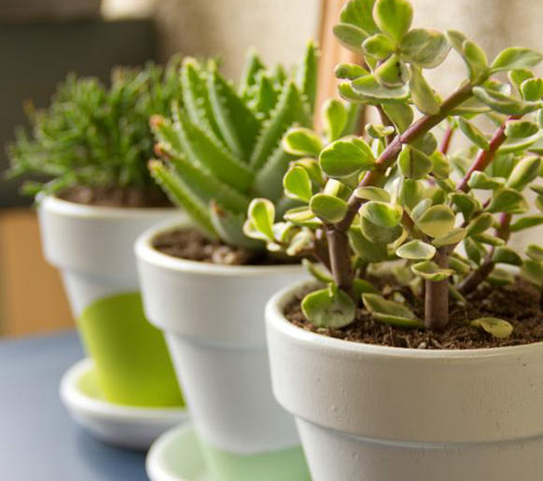 88-Watering-Succulents-