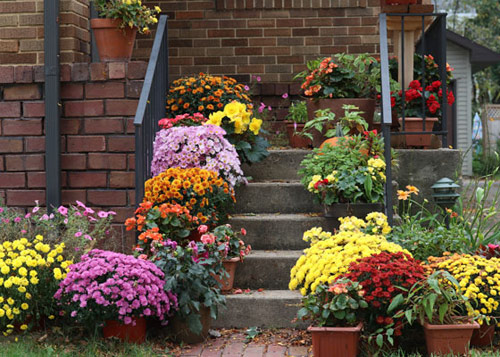 92-Mums-In-Containers-F