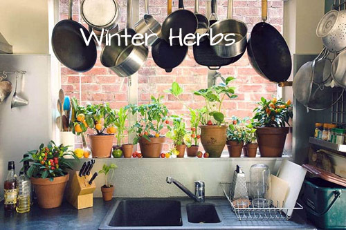 1053-Winter-Herbs-Indo