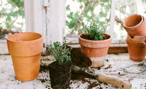 1055-Herbs-Potted-In-C