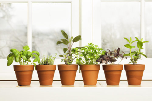 1058-Indoor-Herbs-In-C
