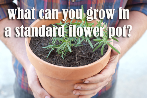 1073-What-Can-You-Grow-In-A-Standard-Flower-Pot