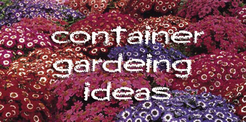 1102-Container-Gardening-Ideas