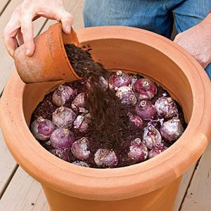 1286-Cover-The-Bulbs-With-Potting-Soil-In-The-Planters