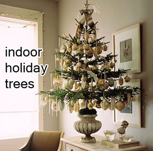Make a indoor Christmas Tree by planting it in a garden container