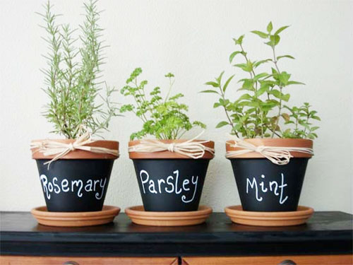 Turn Potted Herbs into air purfiers