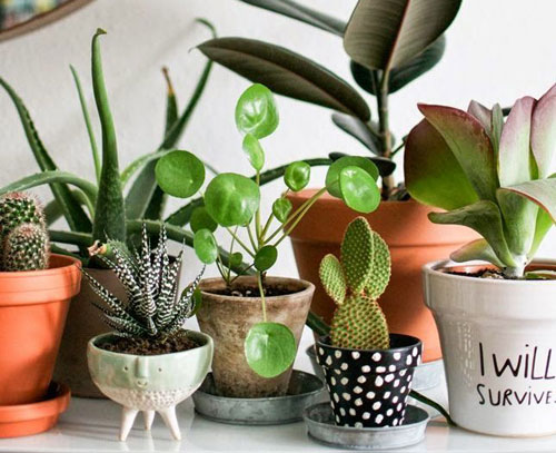 How to grow healthy indoor houseplants