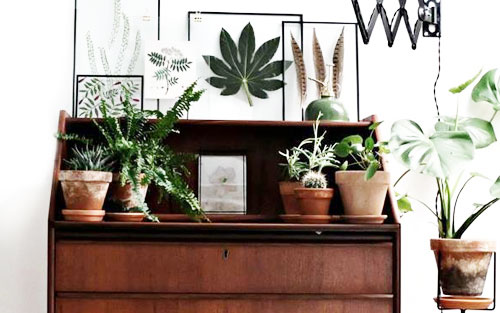 Potted indoor houseplant tips