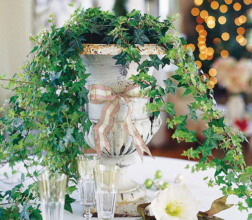 1668-Ivy-Potted-Indoors
