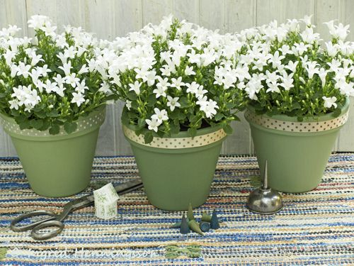2104 St Patricks Flower Pots