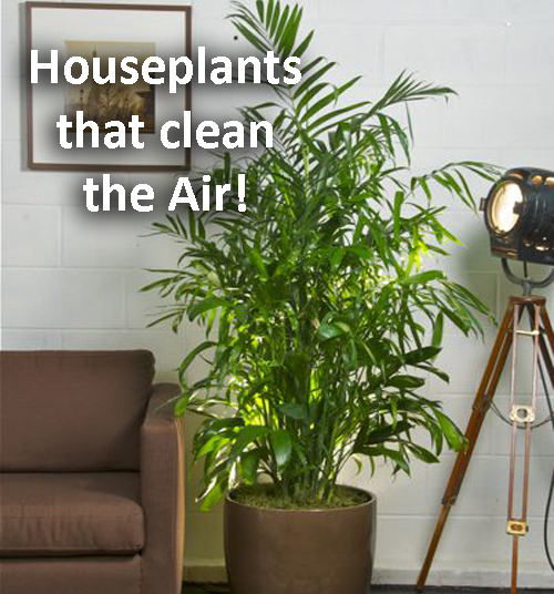 Potted Houseplants that Clean the Air