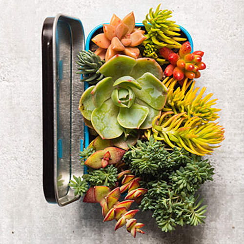 Mini Succulent Garden in a Mint tin