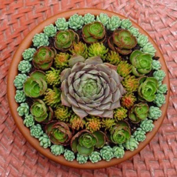 2498-Succulents-In-Garde