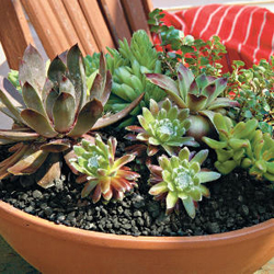Potted Succulents Arizona Pottery