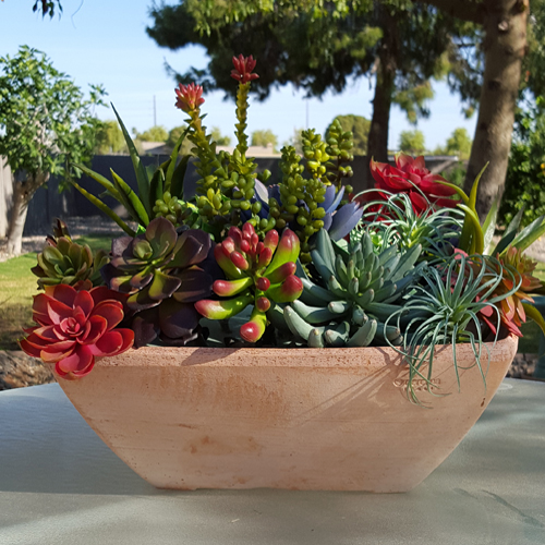 Potted Succulents in Arizona Pottery Garden Bowl