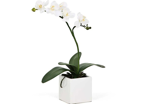 2539-Potted-Orchids