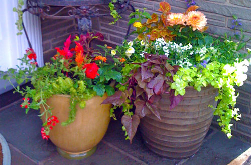 Since Container Plants Require Frequent Watering