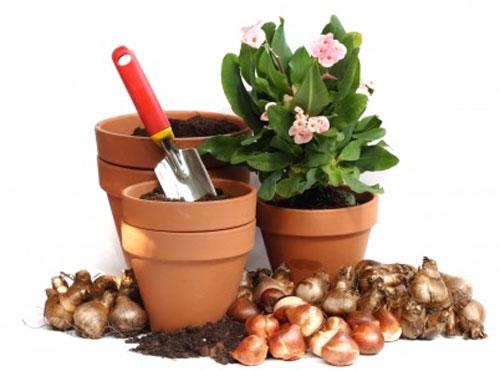 Bulbs beautiful easy for Gardening tools near me