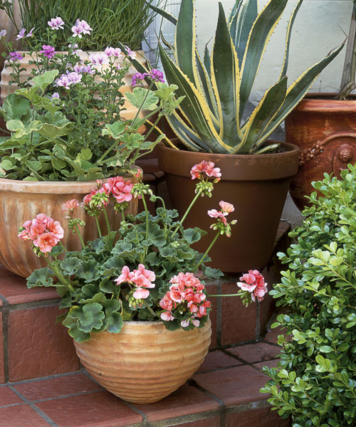 Keep containers beautiful - Best compost for flower pots solutions within reach ...