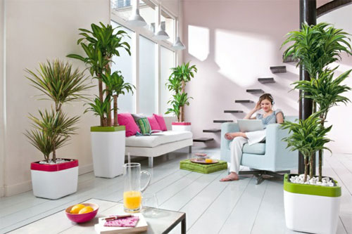 3724-Indoor-Houseplants-