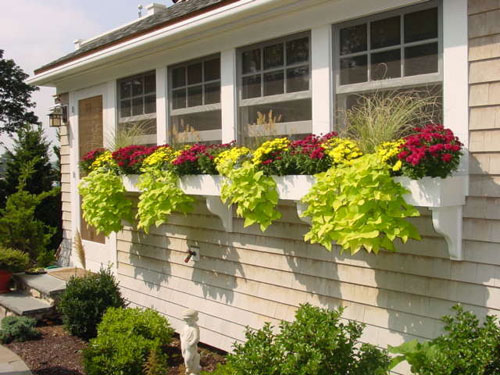 3735-Window-Box-Garden-P