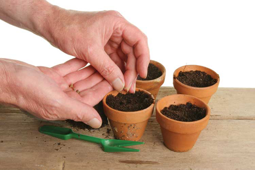 3869-Seedlings-In-Clay-P