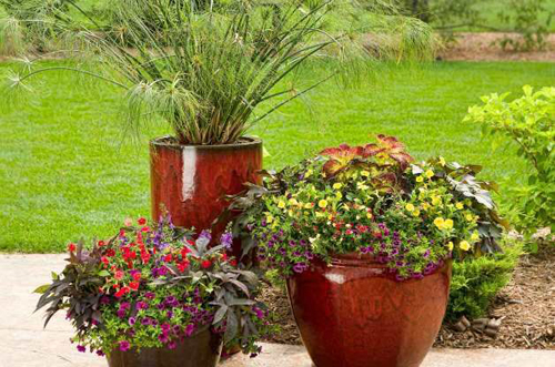 Home the pottery post blog terracotta pots wholesale pots pottery ollas arizona pottery - Small space container gardens design ...