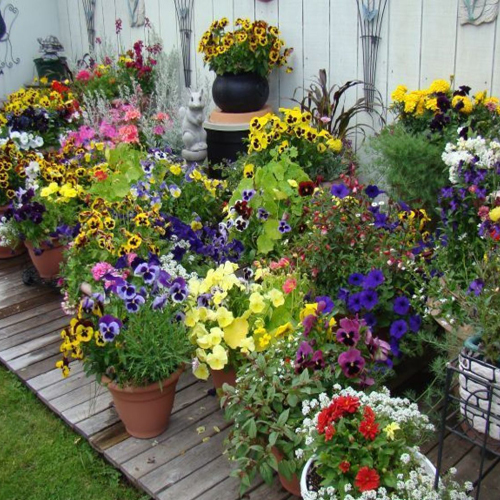 4039-Container-Gardens