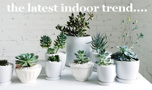 436 Latest-Indoor-Garden-Trend