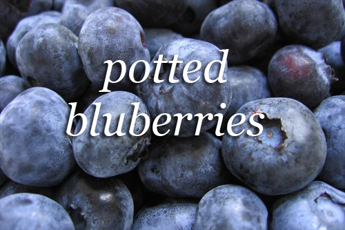 654-Blueberries