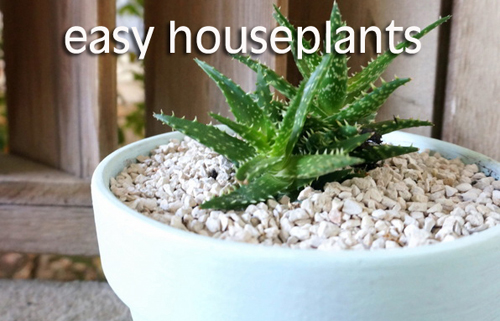 793-Easy-House-Plants