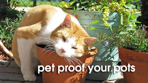 799-Pet-Proof-Your-Pots