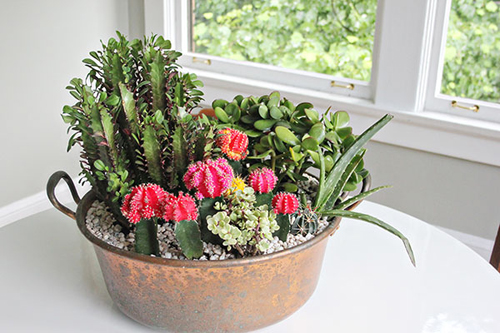 8410-Potted-Succulents