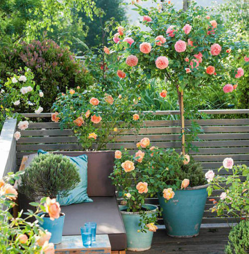 8418-Potted-Roses