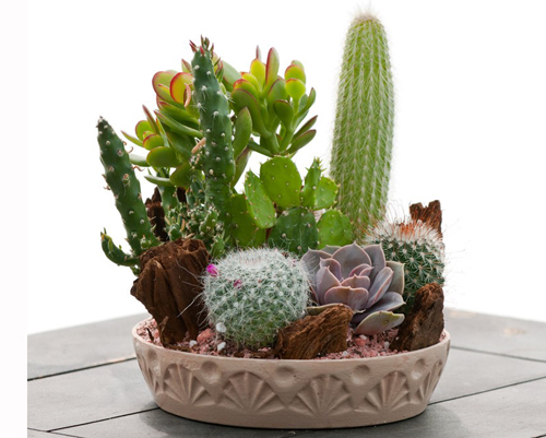 8440-Potted-Cactus-Plant
