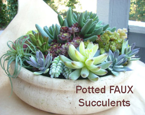8444-Potted-Succulents