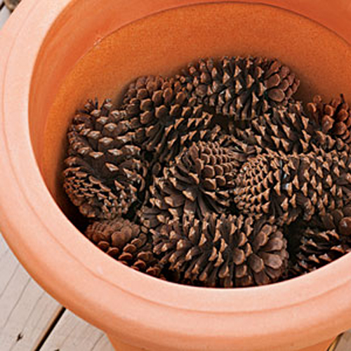 8455-Pine-Cones-In-Botto