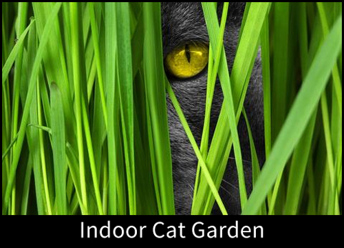 8466-Indoor-Cat-Garden