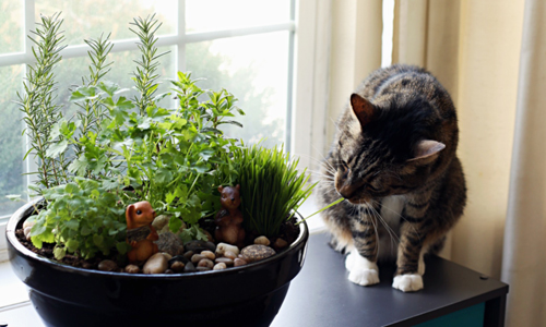 8467-Indoor-Cat-Garden