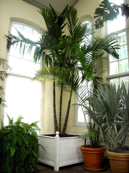 8525-Potted-Tropicals
